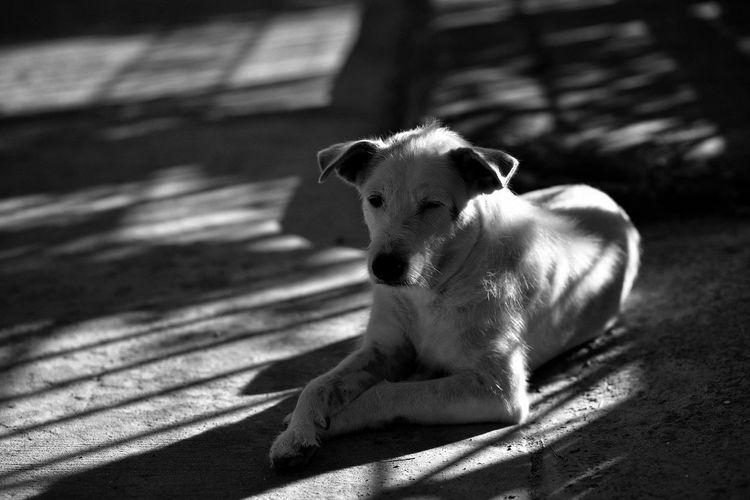 Portrait of dog sitting on floor