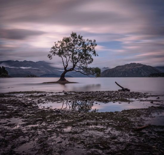 Willow tree amidst lake wanaka by mountains against cloudy sky