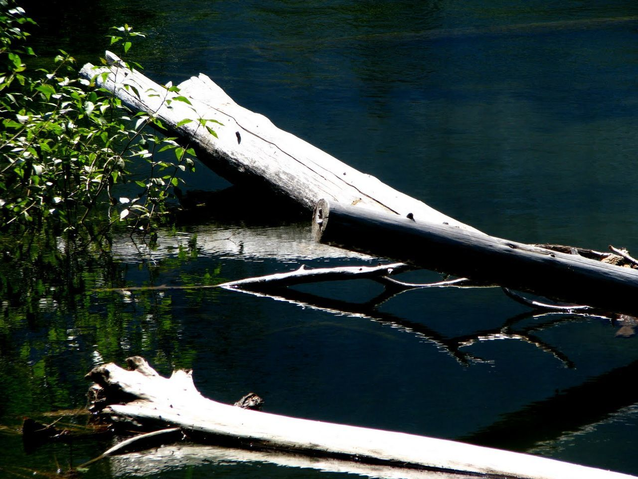 water, day, nature, no people, outdoors, lake, beauty in nature, nautical vessel, tree, close-up, animal themes