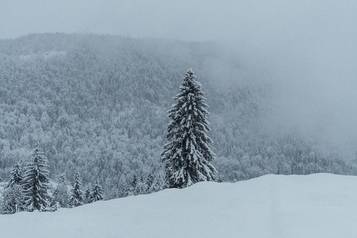 Lonely forest tree during heavy snow fall in winter wonderland scenery in the Alps. Nature Photography Snow ❄ Beauty In Nature Cold Temperature Day Fog Forest Forest Photography Frozen Landscape Mountain Nature No People Outdoors Scenics Snow Snow Covered Snow Day Snowing Tranquil Scene Tranquility Tree Weather Winter Winter Wonderland