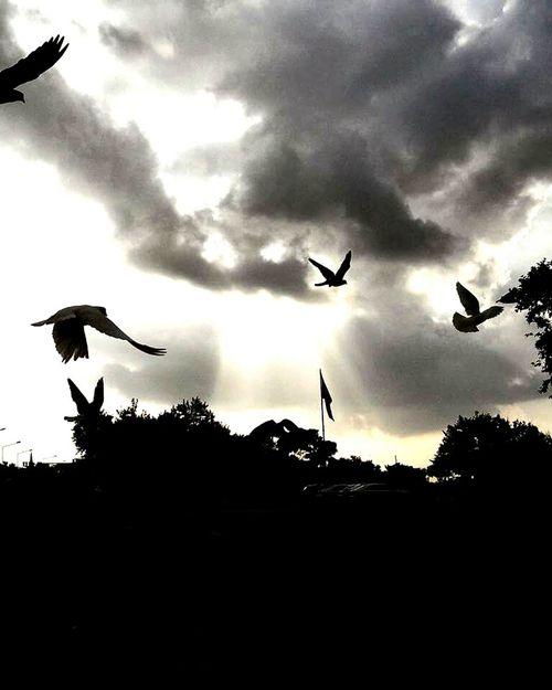 Uçun kuşlar uçun özgürlüğe kanat çırpın.. Birds Flaytography Flaying Eym