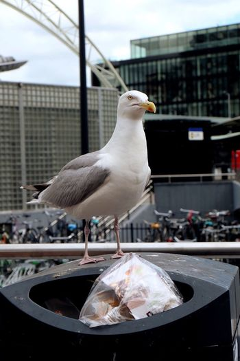 Close-up of seagull perching on garbage can in city