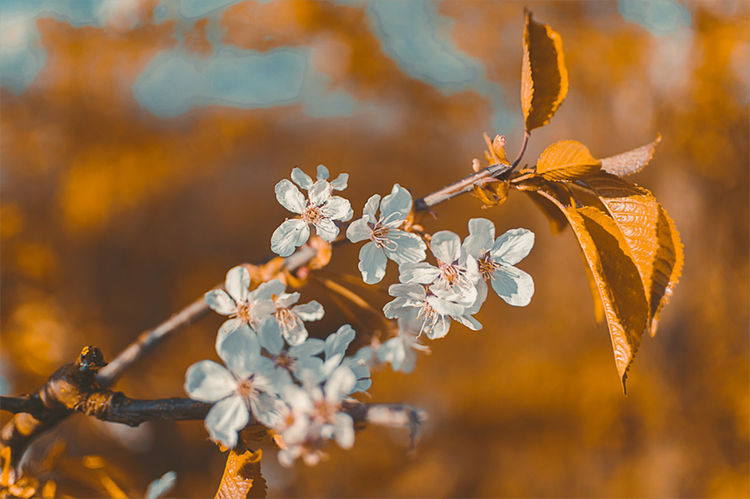 Almost Spring EyeEm Best Shots EyeEm Nature Lover Orange Teal Beauty In Nature Blooming Blossom Branch Close-up Day Flower Flower Head Focus On Foreground Fragility Freshness Growth Leaf Nature No People Outdoors Petal Spring Springtime Tree Twig