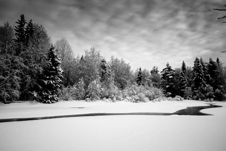 Frost Snow 65degreesnorth Finland Winter Fujifilm_xseries Blackandwhite