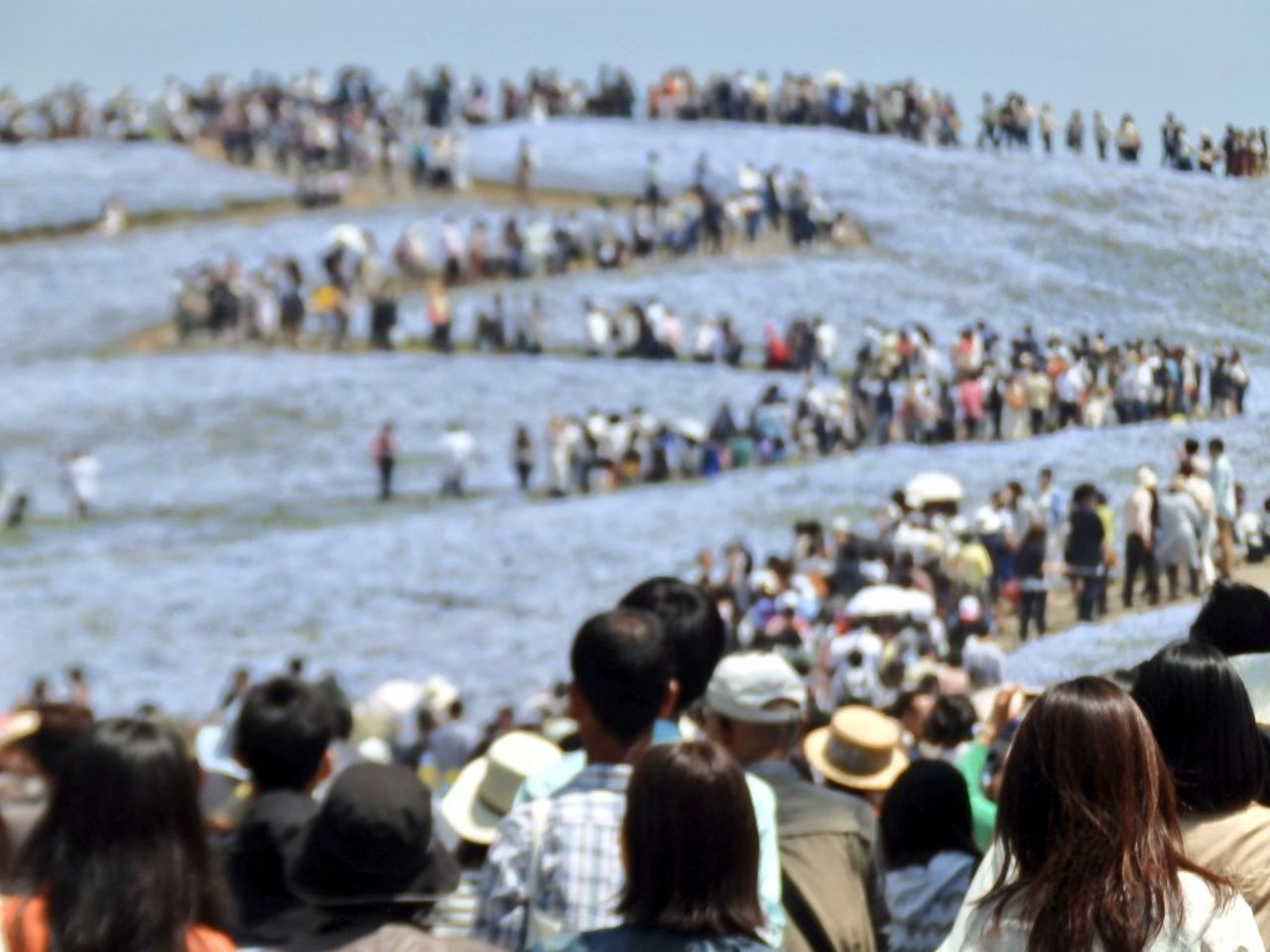 beach, large group of people, crowded, crowd, large group of animals, sea, people, outdoors, day, sky, adult