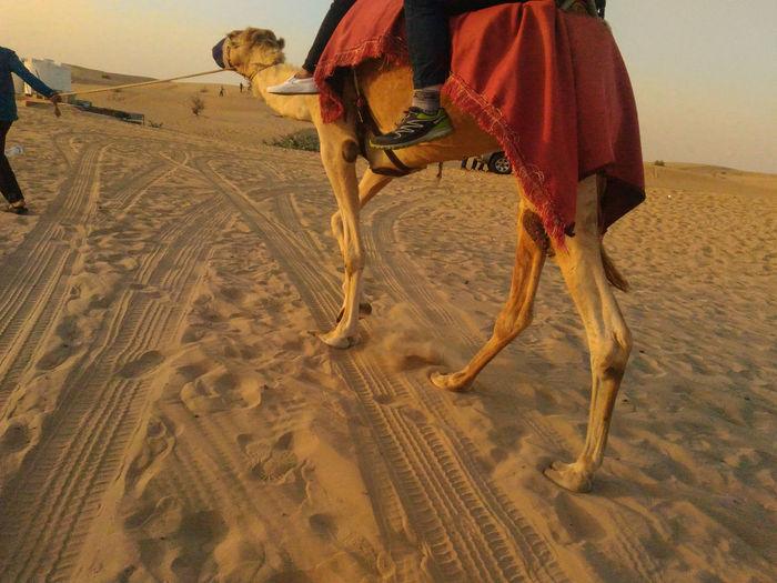 Sand riding horse in desert