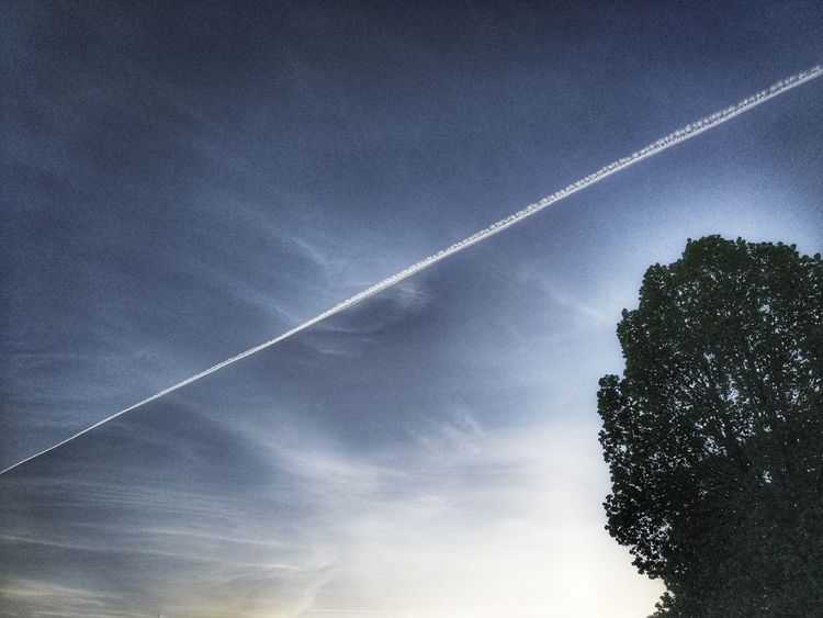 Vapor Trail Contrail Low Angle View No People Nature Sky Outdoors Beauty In Nature Day Tree