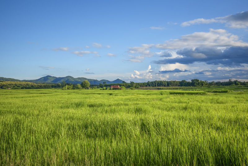 73966153a landscape of green field on bright day / view of countryside agriculture  farm land with green