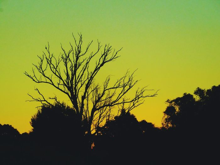 Tree Sunset Onmove Highwayphotography