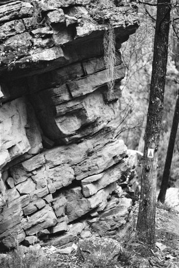 Rocky Gorge Film ISO400 Ilford HP5 Plus EyeEmNewHere Day No People Outdoors Sunlight Nature Close-up