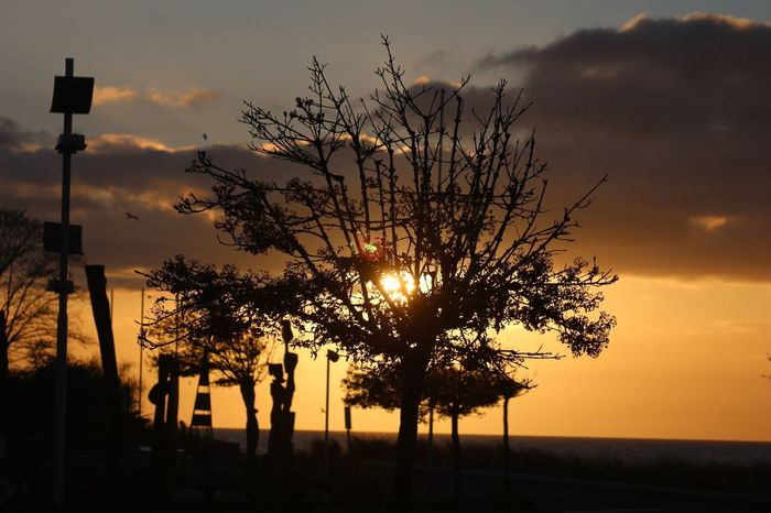 Sunset Sky Silhouette Beauty In Nature Plant Cloud - Sky Orange Color Tree Scenics - Nature Tranquility Sun Idyllic No People Back Lit