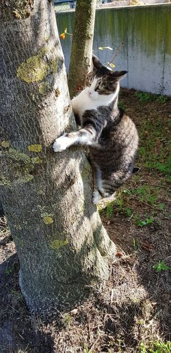 Climbing Silly Cat  Wild Thing Cats Of EyeEm Pets Low Section Shadow Domestic Cat High Angle View Sunlight Feline