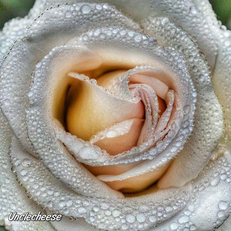 Streamzoofamily Myeditingobsession Nikon Flowers, Nature And Beauty