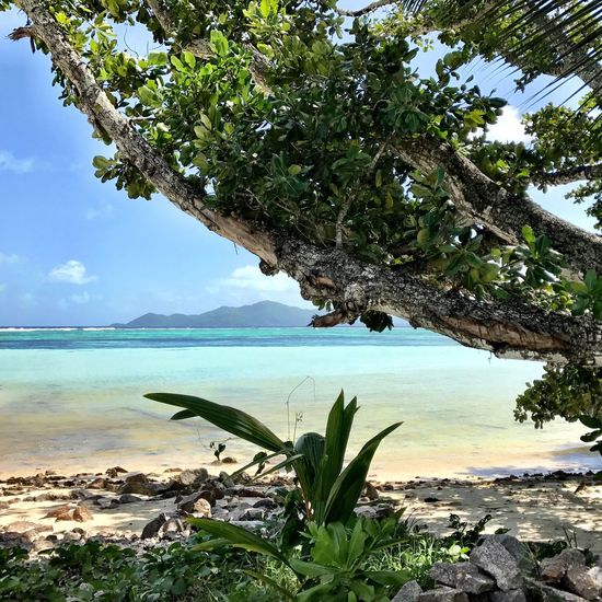 Tree Sea Water Nature Beauty In Nature Scenics Growth Tranquil Scene Sky Day Tranquility No People Green Color Beach Branch Outdoors Horizon Over Water Leaf Freshness Anse Source D'argent La Digue Amazing Place Amazing Nature Seychelles Shotoniphone7