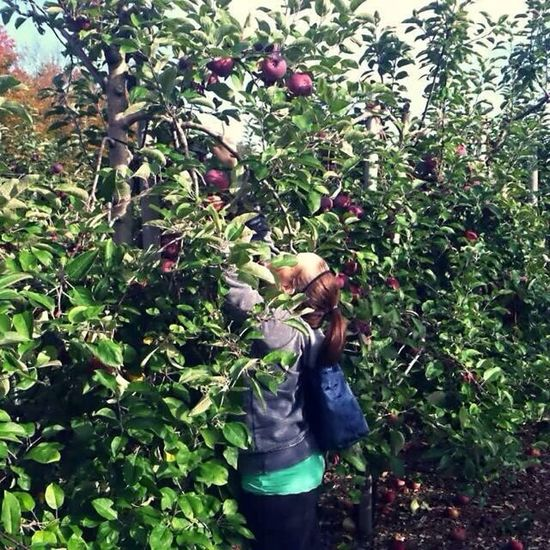 Apple Weekend Having Fun Trees apple picking :)