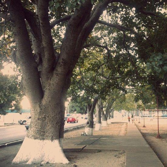 Hay Caminos del Presente que te llevan la Mente al Pasado , ¿hablan los arboles? road present past tree
