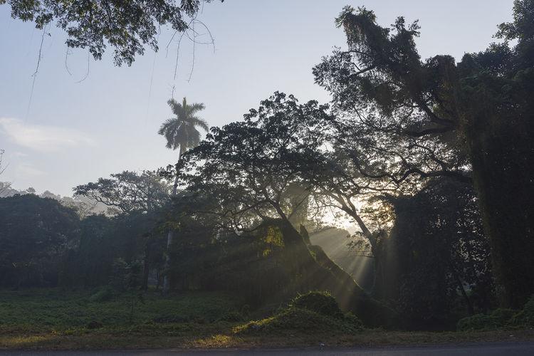 Urban forest Forest Sunlight Sunrays Sunbeam Tree Sky Foggy Growing Countryside Tranquility Woods Tranquil Scene Fall Calm Scenics Idyllic