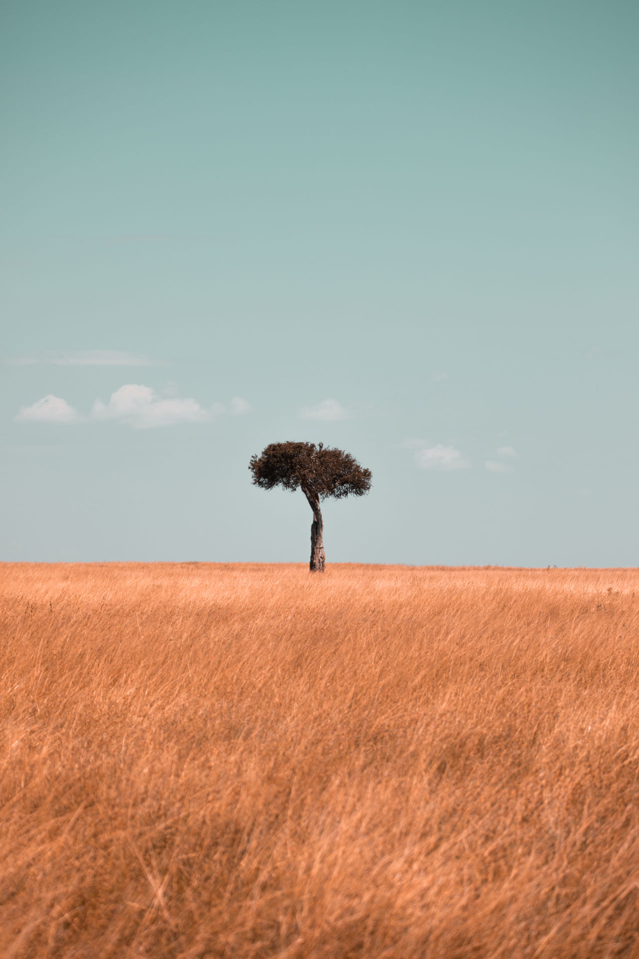 Tree on grassy landscape against sky