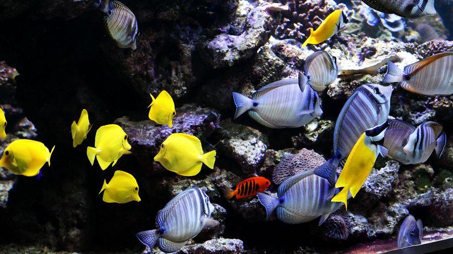 43 Golden Moments Fish Colour Of Life 2016 Juni Niklas EyeEm Diversity BYOPaper! The Week On EyeEm Perspectives On Nature