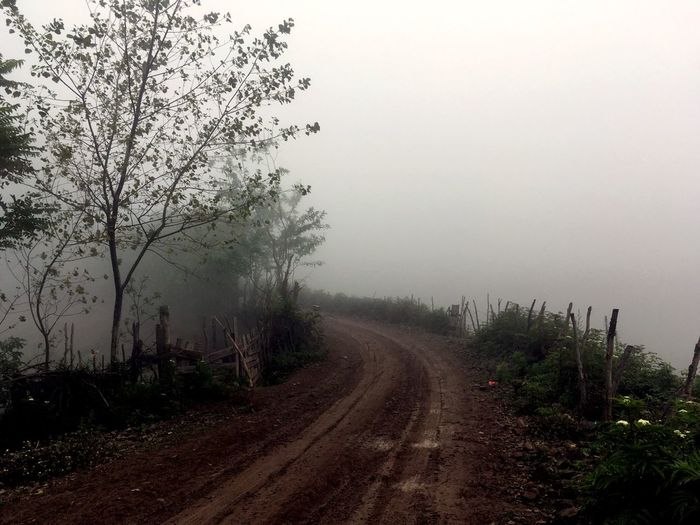 Foggy The Way Forward Diminishing Perspective Vanishing Point Tree Fog Tranquility Tranquil Scene Road Nature Foggy Day Country Road Country Life Beauty In Nature Non-urban Scene Overcast Pathway To Heaven Pathway Long On The Way Traveling in Iran Mazandaran Sari at چورت