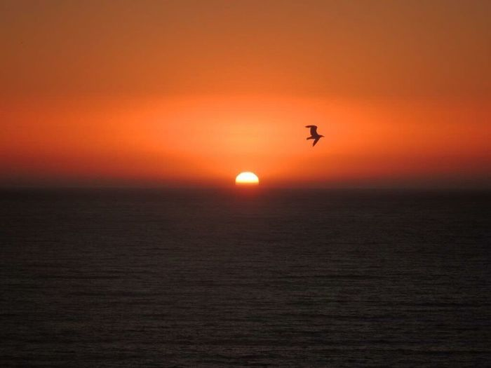 Sundown Beautiful Sundown When The Sun Goes Down..♥ Seagull Flying Free Sunset And Sea Orange Sky Horizon Over Sea Idyllic Beauty In Nature One Animal In Front Of Me The Purist (no Edit, No Filter) Sea View... Love It!  Enjoying The Sunset Reñaca Beach , Chile