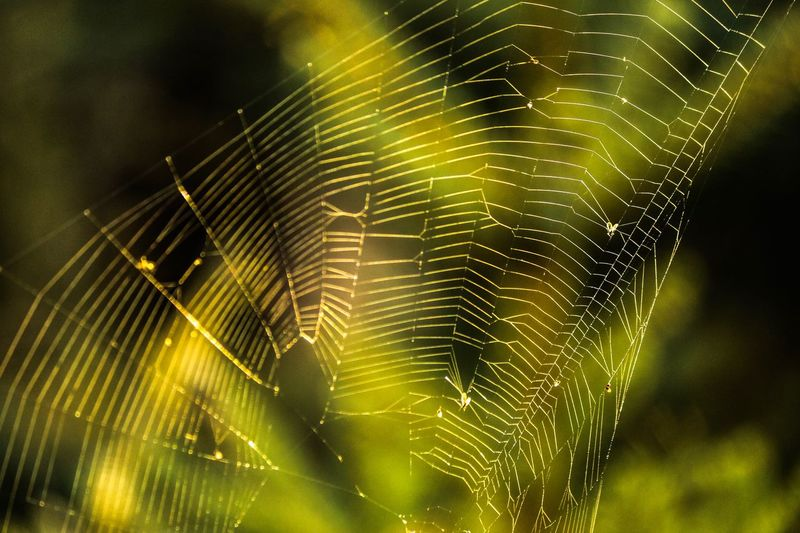 Spider Web No People Nature Plant Fragility Focus On Foreground Close-up Beauty In Nature Outdoors Pattern Day Vulnerability  Green Color Natural Pattern Complexity