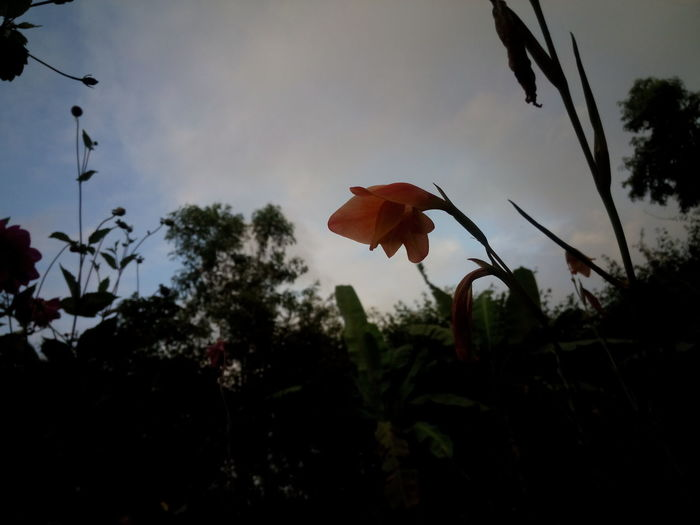 Flower Low Angle View Evening Click.