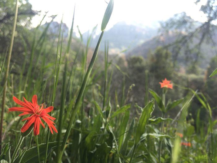 Sing It Wildflowers Ladybug Campground Braiagasm XD Stand Alone