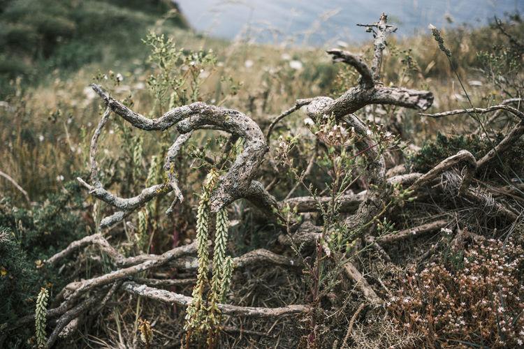 View of dead tree in field looking animalistic