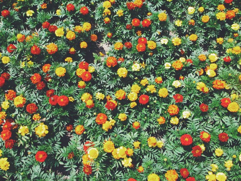 Nature Flowers Orange Yellow Green Inspiring Inspirational