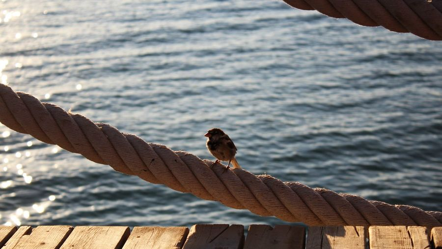 Pier on wooden post by sea