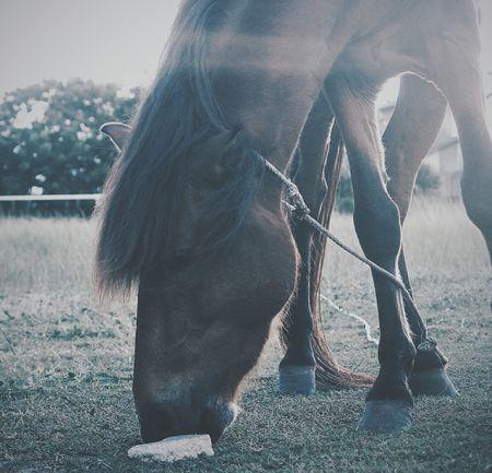 Horse Wild Nature Nature Photography Darktone Moody EyeEm EyeEm Best Shots Eyeem Market