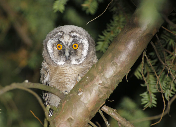 Close-up portrait of owl on branch