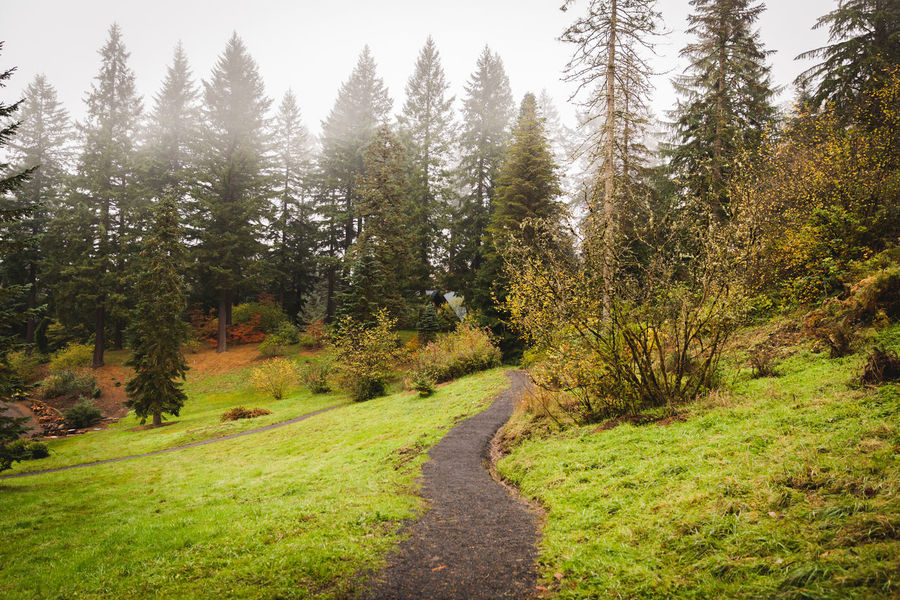 Hoyt Arboretum / Forest Park in Portland, Oregon, USA. Fall time foggy and rainy day. Beauty In Nature Day Grass Green Color Growth Landscape Nature No People Outdoors Scenics Sky Tranquil Scene Tranquility Tree