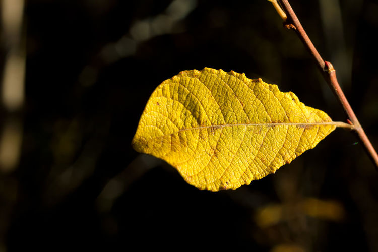 Bukeh Close-up Day Leaf Nature No People Outdoors Sunlight Yellow