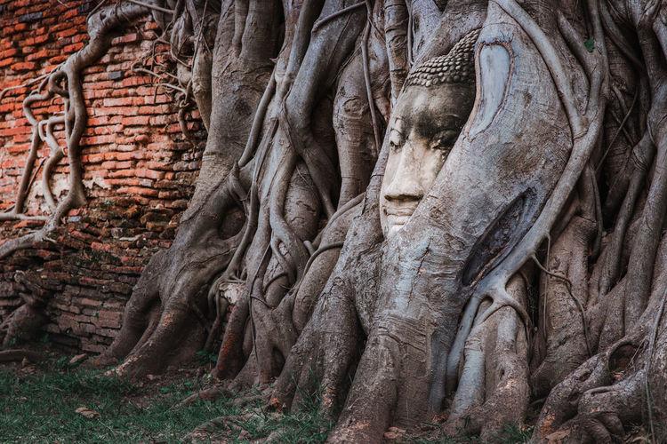 View of buddha statue