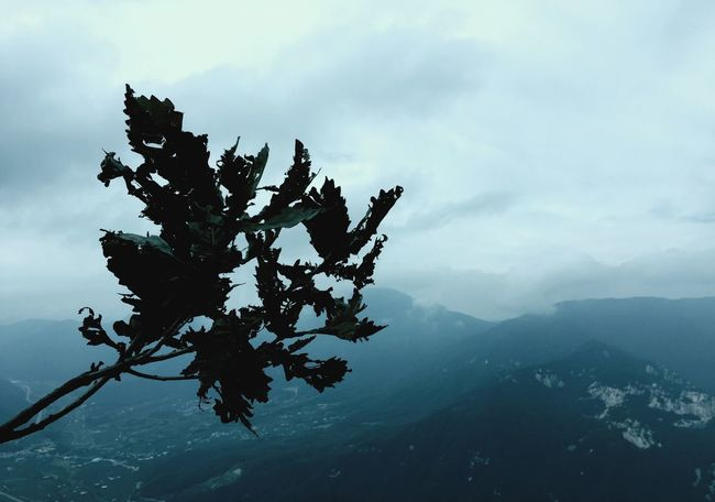 Nature Beauty In Nature Mountain Sky Mountain Range Autumn Leaf Weather Winter Tree Silhouette IPhoneography Lonely