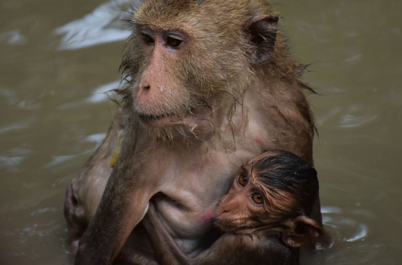 Animal Family Animal Themes Animal Wildlife Animals In The Wild Close-up High Angle View Infant Lake Mammal Monkey Nature Outdoors Two Animals Water Waterfront Young Animal