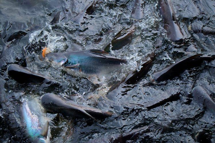 Fish Beautiful