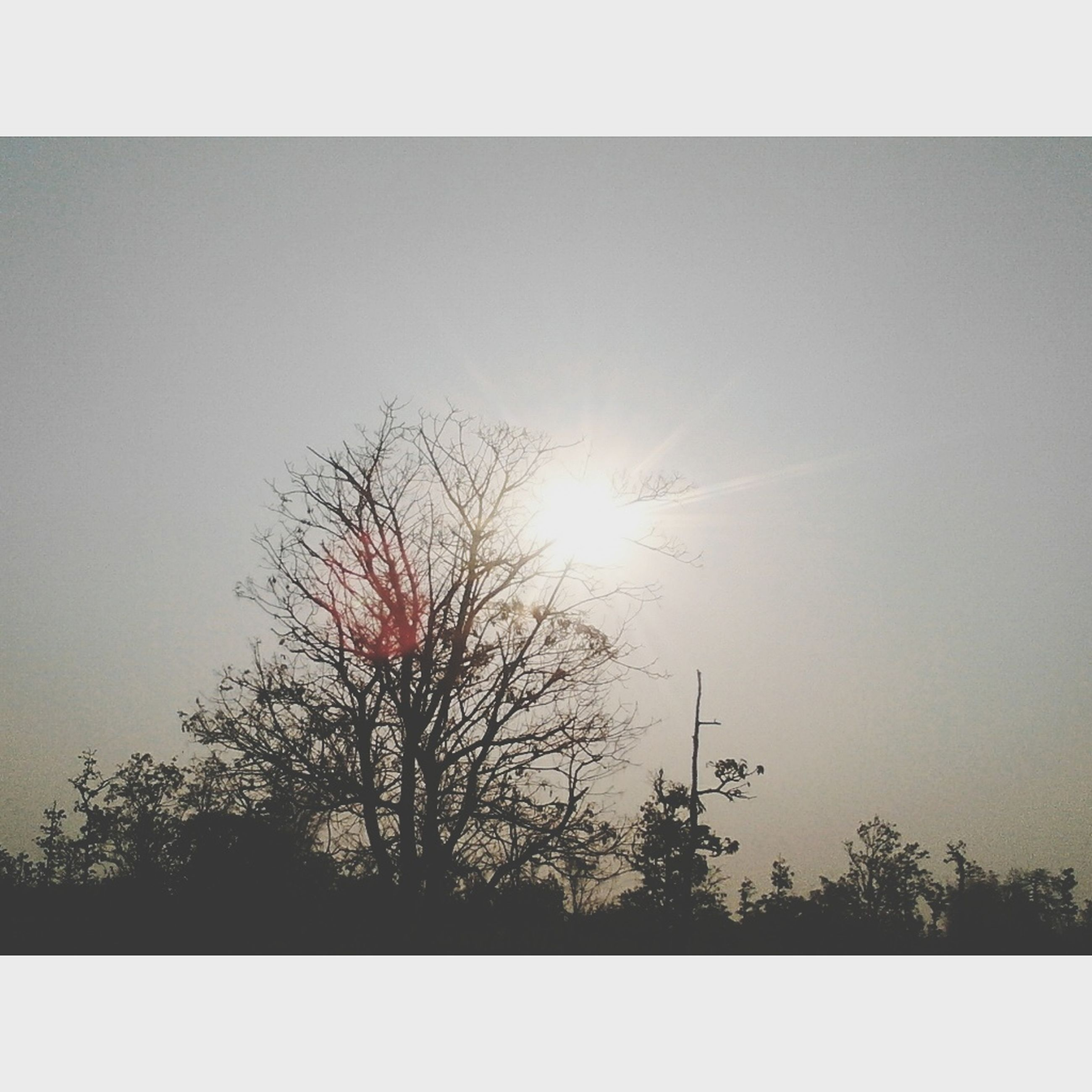 transfer print, sun, auto post production filter, tree, sunlight, sunbeam, tranquility, silhouette, beauty in nature, nature, tranquil scene, sky, scenics, lens flare, clear sky, branch, low angle view, growth, bare tree, sunset