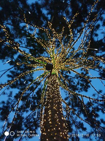 starry dazzling neon tree.