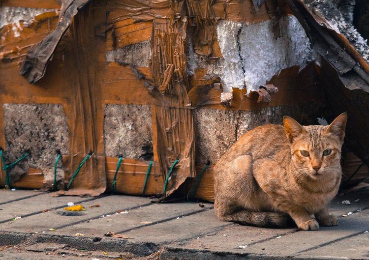 Portrait of orange cat sitting on wood