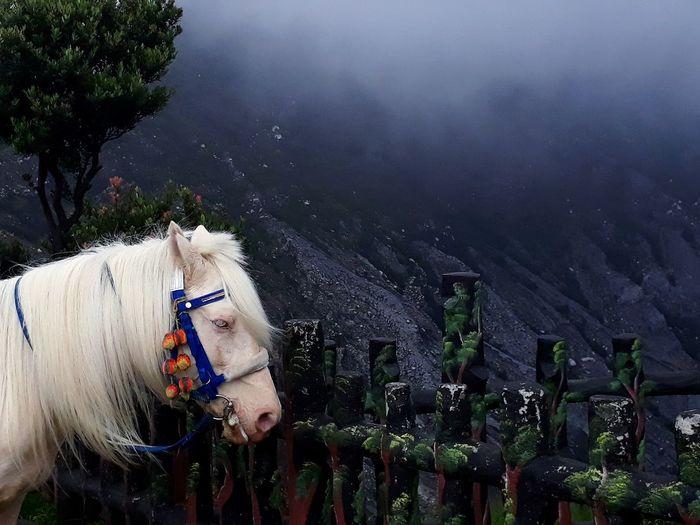 High angle view of an animal on mountain