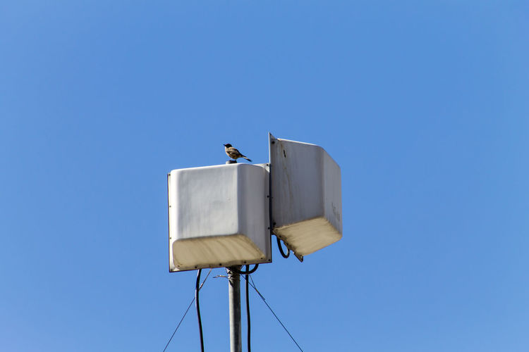 Antenna Copy Space Blue Sky Clear Sky Low Angle View Bird Animals In The Wild Animal Wildlife Animal Themes Animal One Animal No People Vertebrate Perching Nature Day Outdoors Technology Lighting Equipment Metal Power Supply Antenna Wifi Wireless Technology Radio Receiver Transmitter
