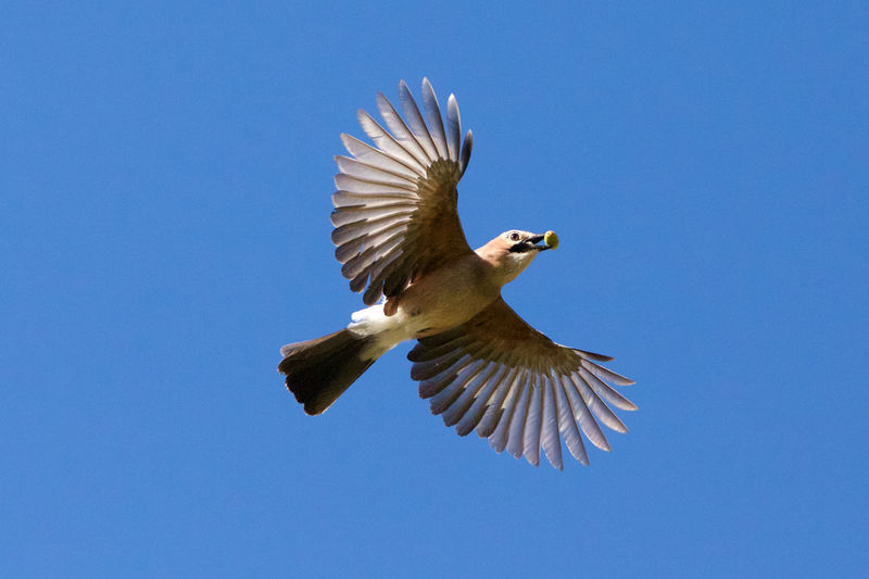 Low angle view of bird flying against blue sky