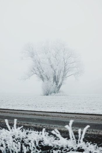 Winter Snow Cold Temperature Plant Tree Beauty In Nature Nature Tranquil Scene No People Day Tranquility Scenics - Nature Field Frozen Environment White Color Land Outdoors