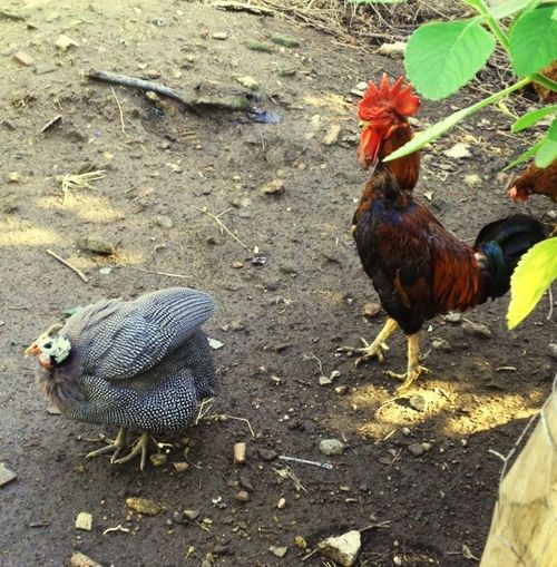 Animal Themes Animals In The Wild Animal Nature Framework Simple Life Rio De Janeiro Duque De Caxias