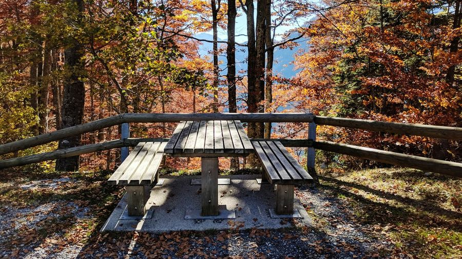 Sunlight Day Tree Outdoors Shadow No People Nature Sky Bench Table Autumn Autumn Colors Landscape
