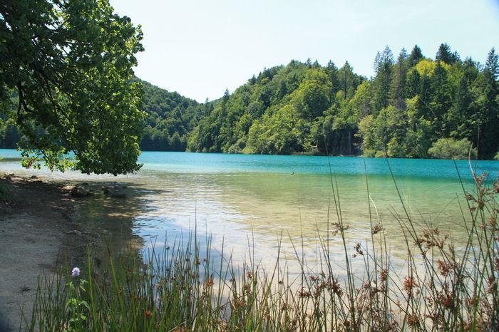 Nice Day Kroatia Blue Sky Best EyeEm Shot First Eyeem Photo Best Eyeem Photo Water Nature Traveling Trees Green Leaves