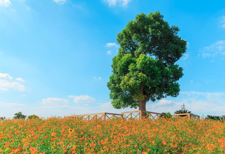 Plant Growth Sky Beauty In Nature Cloud - Sky Nature Day Tree Flower Flowering Plant Freshness No People Tranquility Green Color Outdoors Low Angle View Sunlight Vulnerability  Blue Fragility